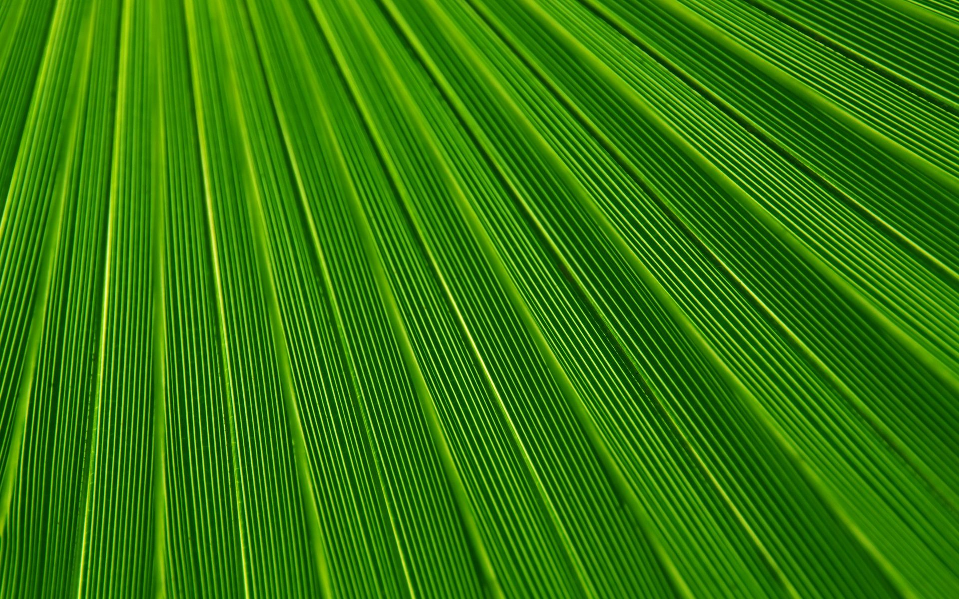couleur verte signification